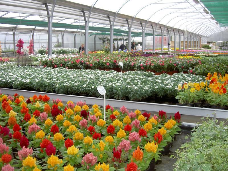 Ausbildung Zierpflanzengärtner